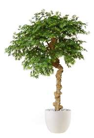Maple Nidra 250 cm Green